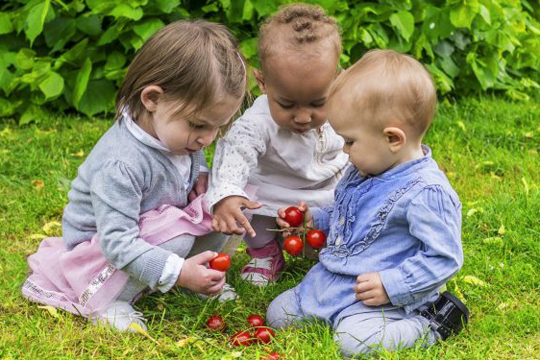 Group of toddlers looking at tomatoes